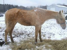 Rescue Village saves five emaciated horses.