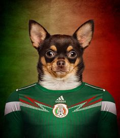 Дизайнеры развлекаются) Собаки в футбольной форме)https://vk.com/red_marketing?w=wall-54592408_712