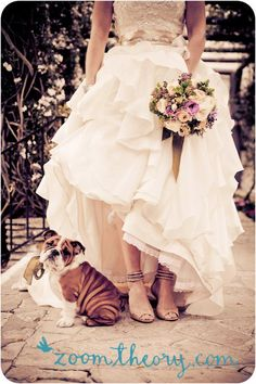 wedding day photos with your puppy