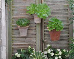 Pots on antique shutters.