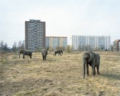 Lichtenberg, Berlin 2008