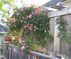 Freestanding trellis and arbor increases height of fence w/o violating city codes... ingenious!