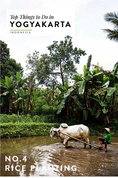 Yogyakarta, Indonesia is known for its beautiful rice paddy fields. Click through for other can't miss activities during your visit to Jogja!