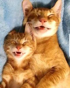 chats-roux-qui-dorment-ensemble