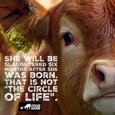 NOT the cycle of life - it's sadistic serial MURDER!