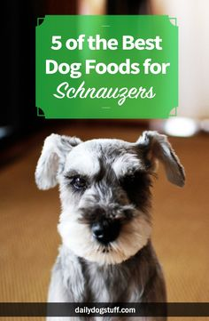 Whether you own a Miniature, Standard, or Giant Schnauzer, nutrition is key to living a happy and healthy life. The Read More The post 5 of the Best Dog Foods for Schnauzers appeared first on Bennett Dogs. Schnauzer Grooming, Miniature Schnauzer Puppies, Schnauzer Puppy, Schnauzers, Giant Schnauzer, Dog Grooming, Dachshund, Dog Training Methods, Basic Dog Training