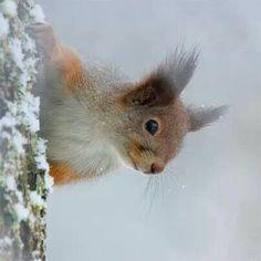Orava <3