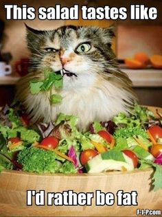 Funny Cat Eating Salad