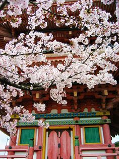 Cherry blossoms at Kiyomizu-dera Temple, Kyoto, Japan