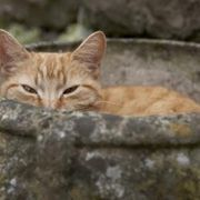How to Get Rid of Cat Pee Smell on Concrete | eHow