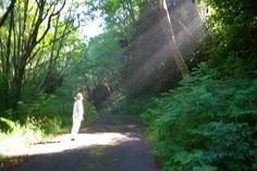 Oregon Coast. Sun reflecting through the trees on me..2009