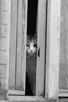 sologatos: 31605 Cat at the window by Andrey Tokarev