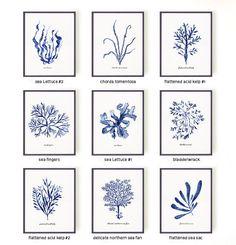 Acuarela de algas pintura Set de 9 botánicos conjunto de