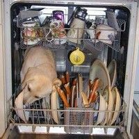 I have caught my own yellow lab in a similar predicament with the dishwasher!