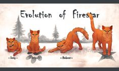 Warrior Cats Evolution Of Firestar by AMBcatbone on DeviantArt Warrior Cat Names, Warrior Cats Comics, Warrior Cats Funny, Warrior Cats Fan Art, Warrior Cats Series, Warrior Cats Books, Warrior Cat Drawings, Cat Comics, Warrior Cats Quotes