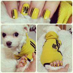 Kill bill Bruce Lee style! #dogclothes #nailart #nails #killbill #dogoutfit #yellow #asianstyle #maltesedog