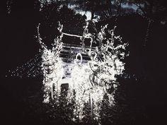 La maison du Père Noël  Salon de Provence . Baobab. @ICphotos