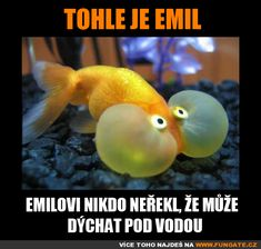 Tohle je Emil Animals Of The World, Animals And Pets, Funny Animals, Cute Animals, Funny Images, Funny Photos, Modern Disney, Sphynx Cat, Animal Memes