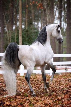Beau cheval.