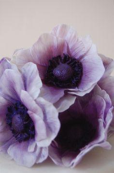 Purple Anemone Sugar Flower « Maggie Austin Cake