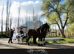 wedding cars, carriages and other transport Horse and carriage at Molenvliet Wedding venue. Wedding cars and transport by Greg Lumley photographer.Horse and carriage at Molenvliet Wedding venue. Wedding cars and transport by Greg Lumley photographer. Wedding Cars, Wedding Venues, Cape Town South Africa, Professional Photographer, Transportation, Wedding Photography, Horses, Wedding Vintage, Trucks