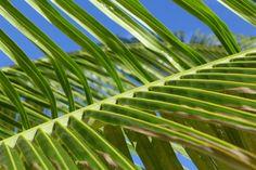Île paradisiaque des Caraïbes: les immanquables de Saint-Martin (Detour Local) -> Ambiance des Caraïbes, jolies plages, St-Martin c'est l'île qui fait rêver www.detourlocal.com/saint-martin-caraibes-top-5-sxm/