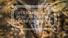 """Tornando uma Foto """"Atraente"""" - Adobe Lightroom CC"""
