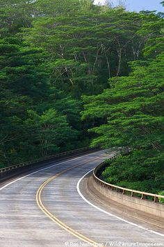 Go cautiously. Who knows what awaits us around the corner. This is the main highway on the island of Kauai.