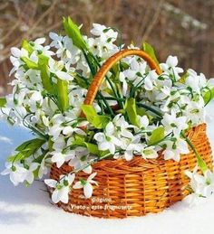 Good Morning My Friend, Flower Wallpaper, Pretty Flowers, Spring Time, Still Life, Outdoor, Home Decor, 8 Martie, Flower Baskets
