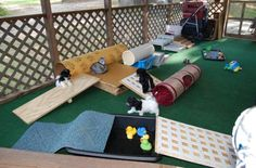 setting up a simple playset for puppies in a room would be great!