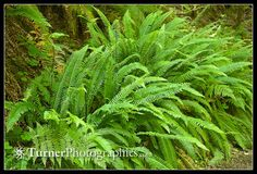 Learning so much about native ferns from Mark Turner!