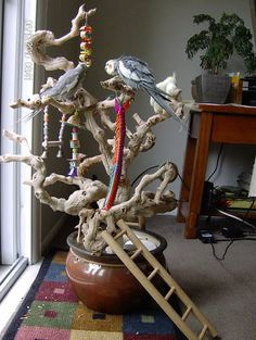 Avian Avenue- lucky tiels! I love this idea, just getting cage top grapevine perches and putting them together for a larger tree.