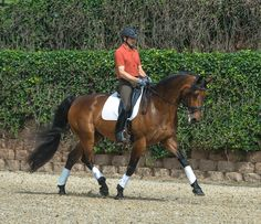 Two methods for teaching your horse to lengthen his trot stride without breaking into canter