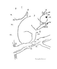 Free Dot to Dot Pages for kids - Squirrel