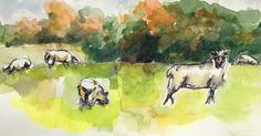 2016-10-24 Sheep still in the field