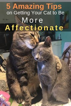 Cat Care Indoors tips on getting your cat to be more affectionate - some cats are quite affectionate and will happily cuddle up on a warm lap, others are resistant to being petted, picked up or cuddled. Perros Golden Retriever, Gatos Cat, F2 Savannah Cat, Cat Care Tips, Dog Care, Cat Behavior, Cat Supplies, Family Dogs, Pet Health