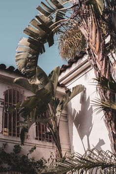 65 ideas for palm tree photography los angeles Tree Wallpaper Iphone, Tumblr Wallpaper, Wallpaper Backgrounds, California Palm Trees, California Dreamin', Wedding Wallpaper, Estilo Blogger, Tumblr Photography, Tree Photography