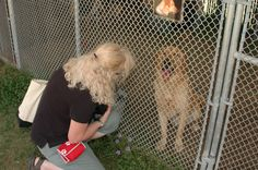 Adopting a Shelter Dog: Questions to Ask