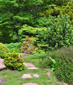 Love the Bristlecone Pine   Three Dogs in a Garden