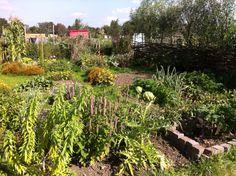 My end of the summer garden