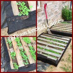 #Pallet gardening for salad greens #Palletgarden #backyard #salad #diy