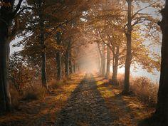 SONETO DEL OTOÑO (de Mario Benedetti) :   En el año el otoño es un sosiego y es la más suave de las estaciones en ella se perdonan los perdones y renace el anhelo solariego  el otoño no tiene sol de fuego ni turbas ni dramáticas visiones los dolores se van de vacaciones y la brisa en las tardes es un juego  en el otoño pasa la jornada lentamente / con calma / con olvido y con la mente bien despabilada  digamos que en la paz ...