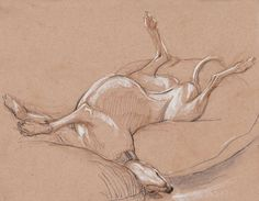 Greyhounds lounge in the most fabulous poses. I made this 8 x 11 original drawing from life, unable to resist the happy, wildly-curving lazy-dog Greyhound Art, Italian Greyhound, Tumbler Drawings, Skinny Dog, Oil Painting For Sale, Lurcher, Animal Sketches, Beautiful Dogs, Dog Art