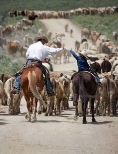 Little cowpoke helping Daddy on the cattle drive - Cowboys 4 Christ O Cowboy, Little Cowboy, Cowboy Horse, Cowboy Pics, Horse Tack, Cowboy Quotes, Horse Quotes, Western Quotes, Foto Cowgirl