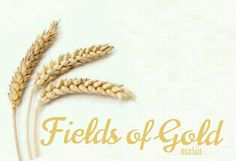 Song of the Wheat Champs, Fields Of Gold, Wheat Fields, Knowing God, Weird Facts, Kansas, Indian Summer, Sun Kissed, Country