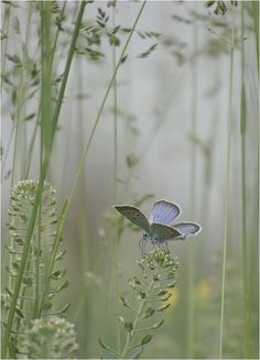 for the faeries ❧ tiny, delicate butterfly