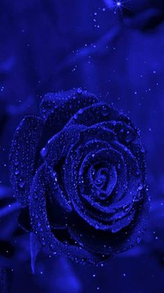 Search free blue Ringtones and Wallpapers on Zedge and personalize your phone to suit you. Start your search now and free your phone Black Flowers Wallpaper, Heart Wallpaper, Dark Blue Wallpaper, Blue Aesthetic Dark, Aesthetic Colors, Beautiful Rose Flowers, Beautiful Flowers Wallpapers, Blue Wallpapers, Blue Backgrounds