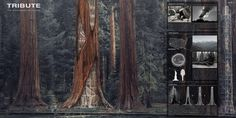 Skyscraper competition proposal involves erecting towers within world's largest trees
