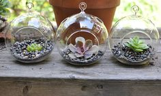 Sitting or hanging succulents glass planters