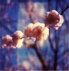 I_IPopcorn Popping On The Apricot Tree